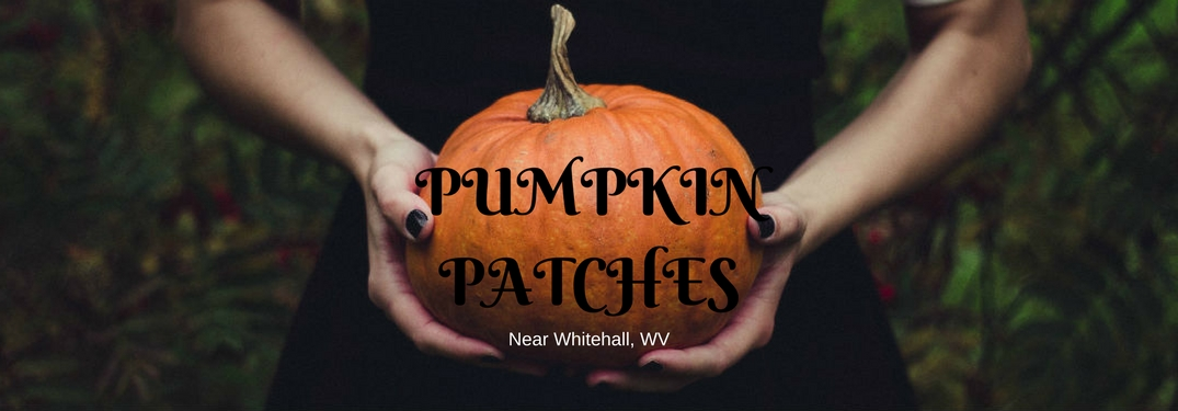 Where are the Best Pumpkin Patches Near Whitehall, WV?