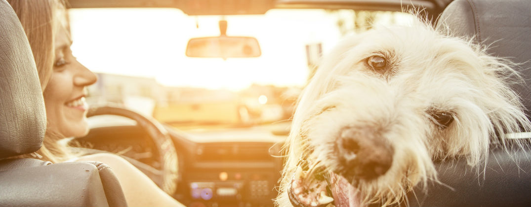 Tips for Taking Your Pet on a Long Road Trip