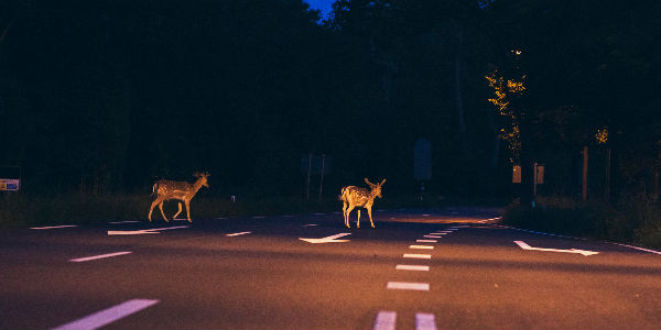 Tips for Avoiding Deer While Driving