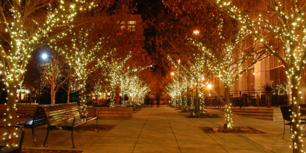 row of trees with twinkle lights on them - Christmas Lights In Dayton Ohio