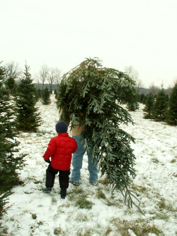 where can i get a tree in dayton