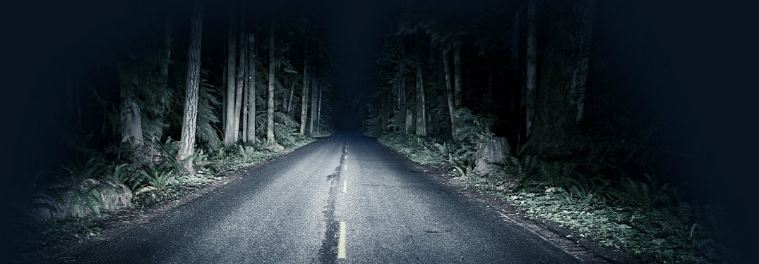 nighttime, road in forest