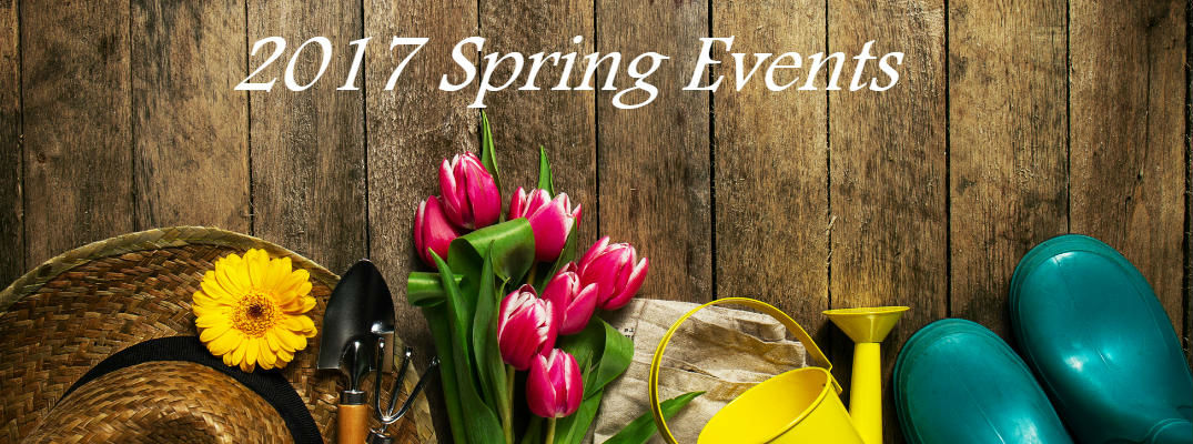 Flowers and Garden Tools on Wood Background