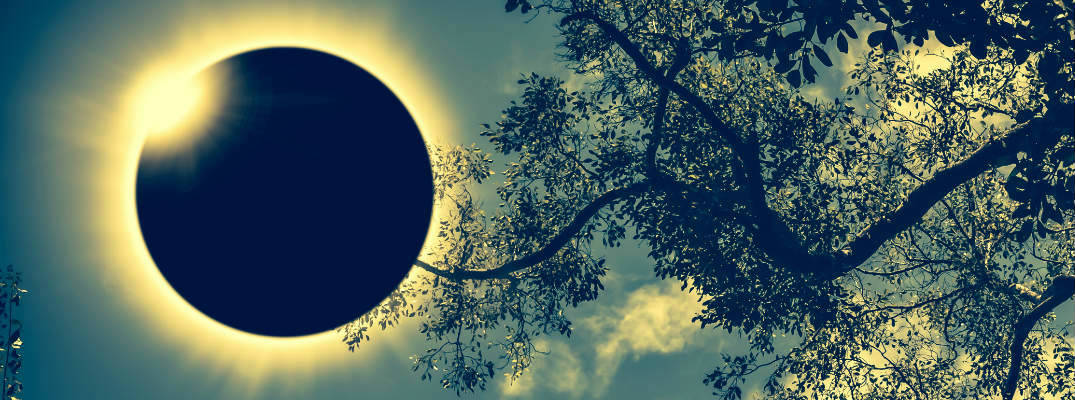 View of Total Solar Eclipse through tree branches