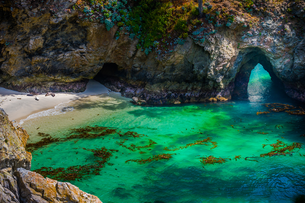 point lobos state natural reserve california coasts crown jewel cardinale volkswagen