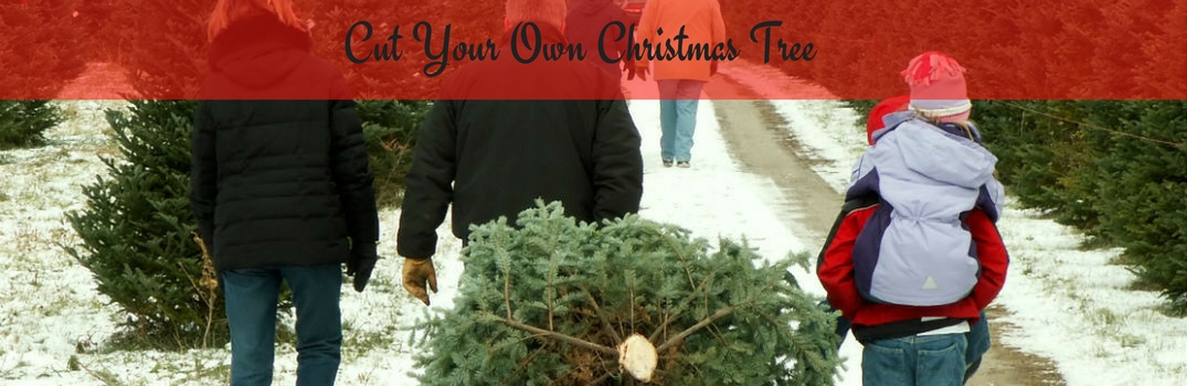 Where To Cut Your Own Christmas Tree Around Burlington Vt