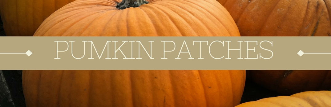 Picture of a pumpkin with a banner that says Pumpkin Patches