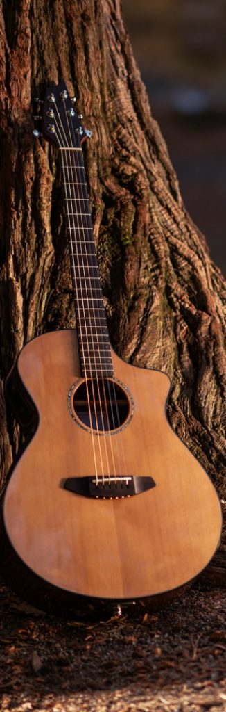 acoustic guitar by tree