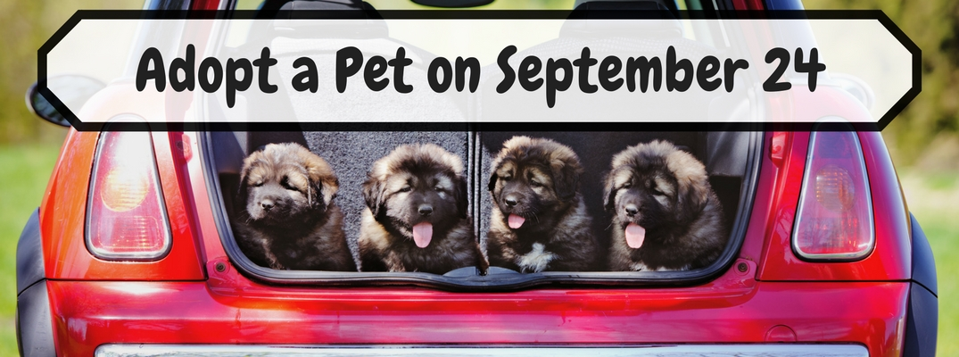 Pet Adoption Day 2017 at Donaldsons Volkswagen