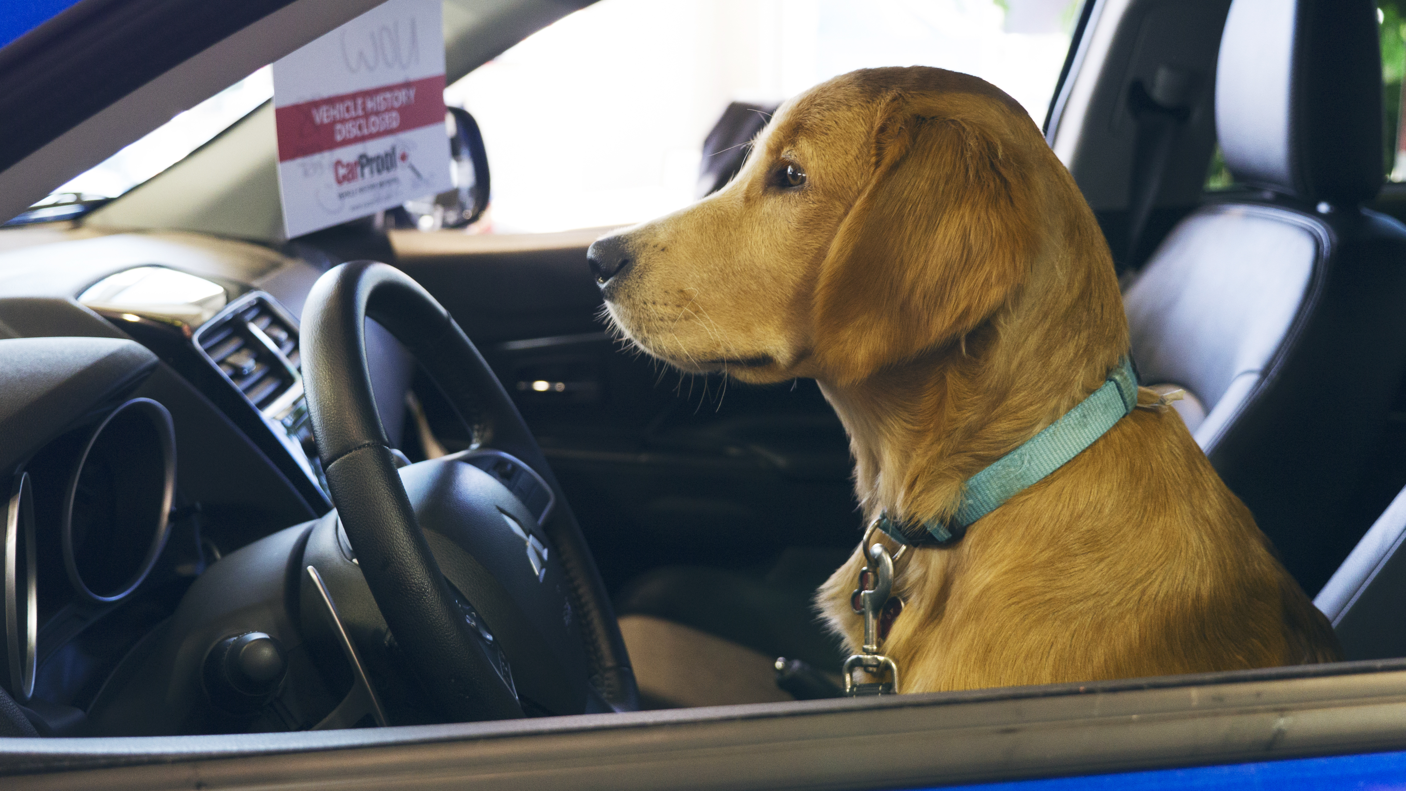 What Kind of Dog Best Suits Your Ride