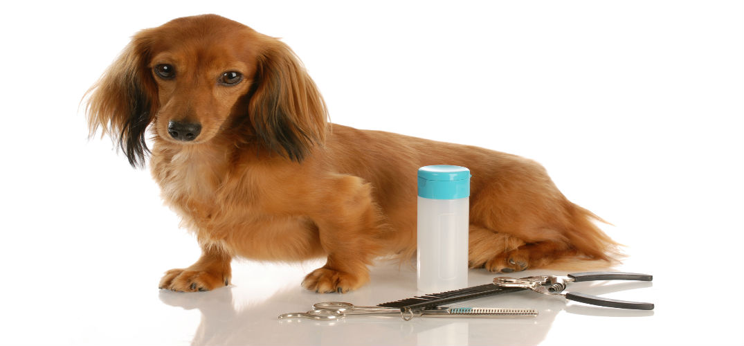 Pet Groomers in Lima, OH