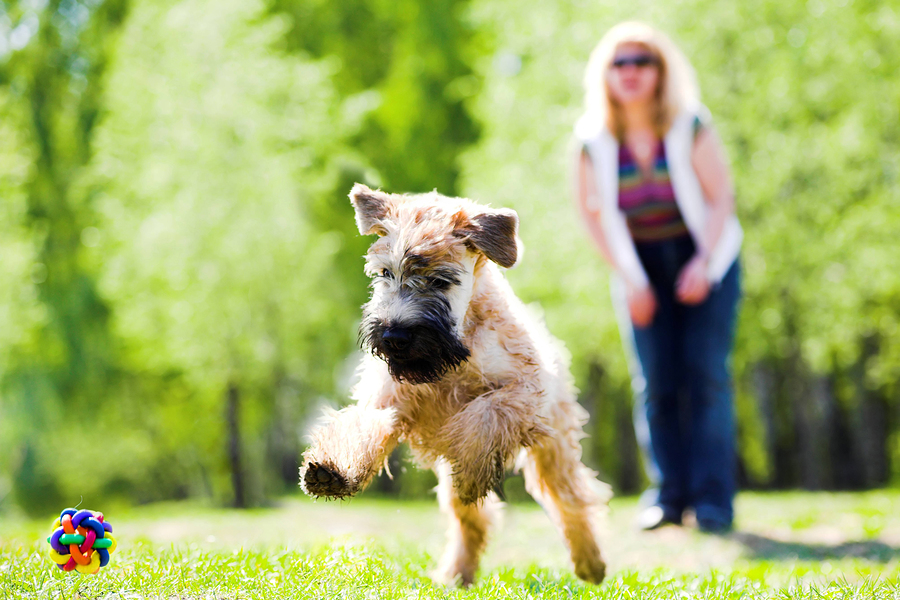 Going Somewhere? Bring Your Dog! Best Vehicles for Dog Owners 2014