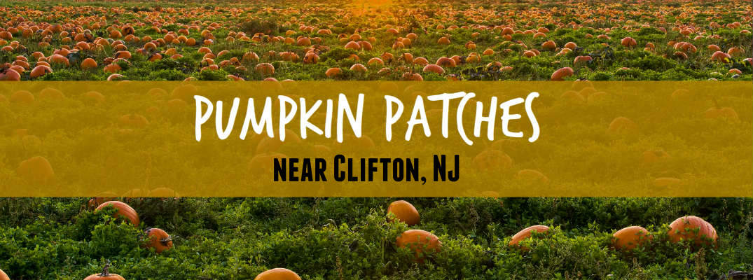 top 3 pumpkin patches near clifton nj for 2016. Black Bedroom Furniture Sets. Home Design Ideas
