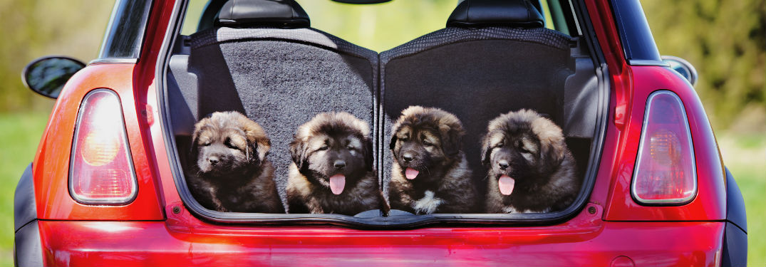Pet Proof Your Car in 5 Steps