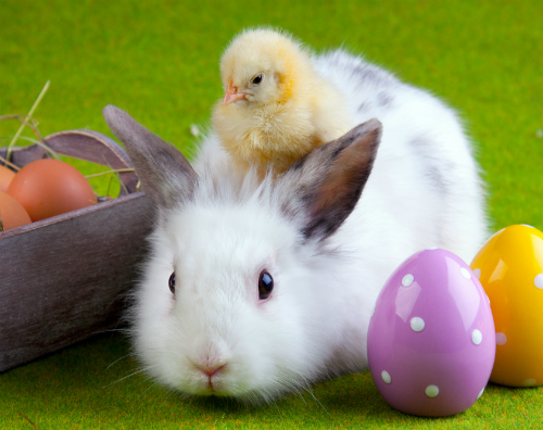 Where to find Easter Egg Hunts in Bexar County TX