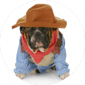 Cute Bulldog in Cowboy Halloween Costume