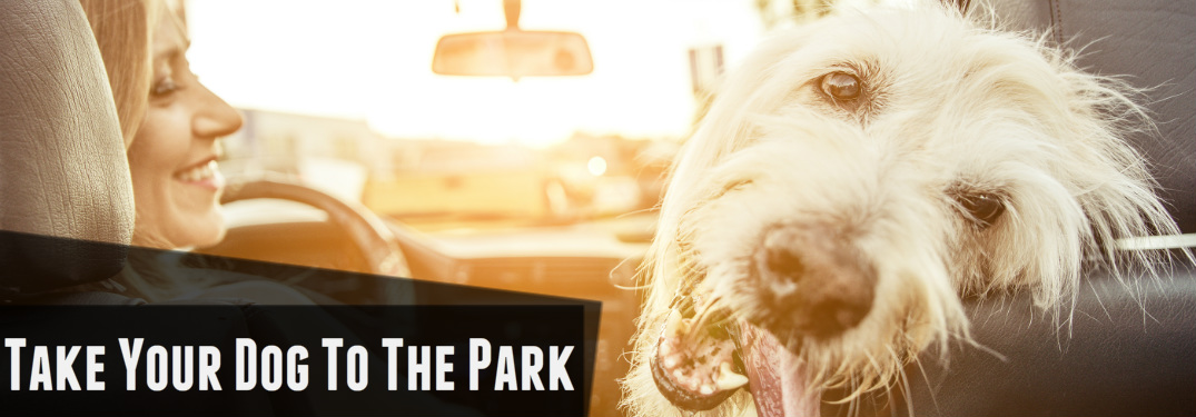 take your dog to the dog park