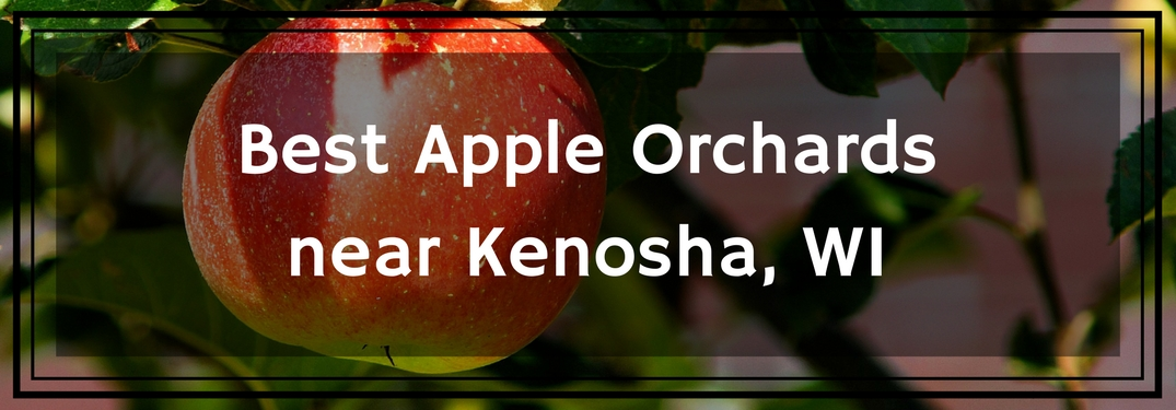best apple orchards near kenosha, wi text overlay on an apple hanging from a tree