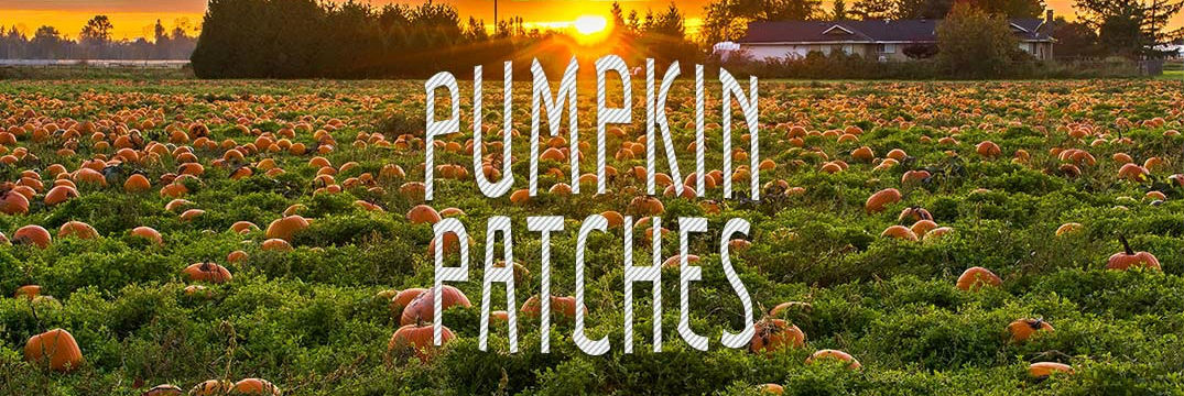 Pumpkin patches in the Lowell and Chesterton IN area