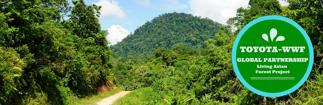 Toyota and WWF Partnership – Forest Project and Climate Change