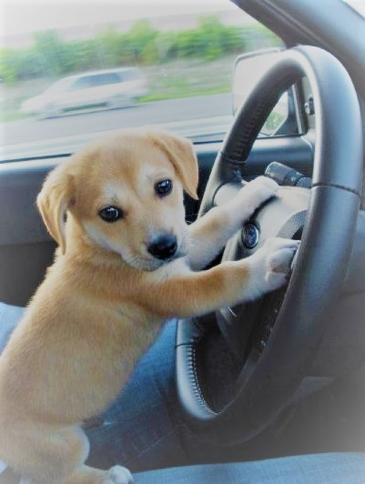 CARS, TRUCKS, & PET SAFETY!