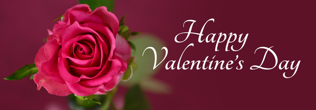 Close Up of Pink Rose on maroon background with White Happy Valentine's Day text