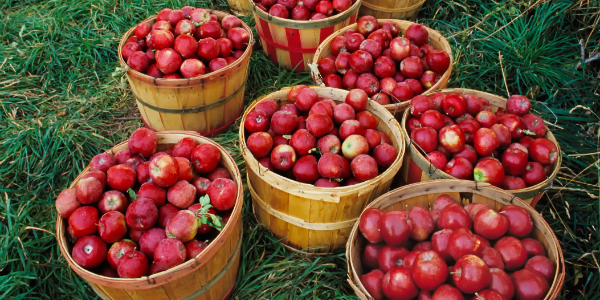 the new england apple production an Cornell's pest management guidelines for commercial tree fruit production sprayer calibration (from 1996/97 new england apple pest management guide.
