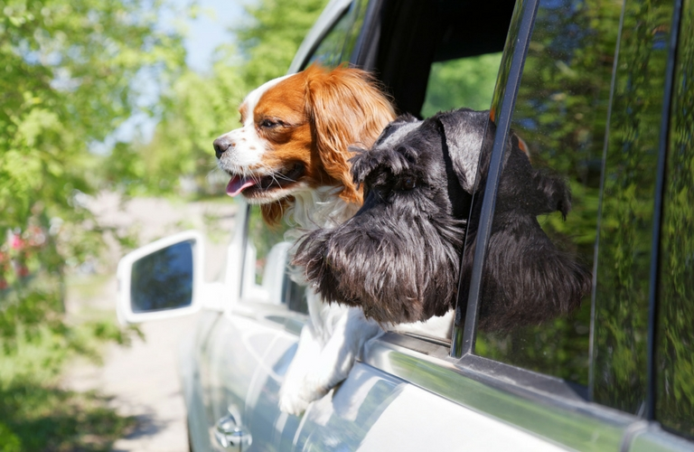 Two dogs out car window