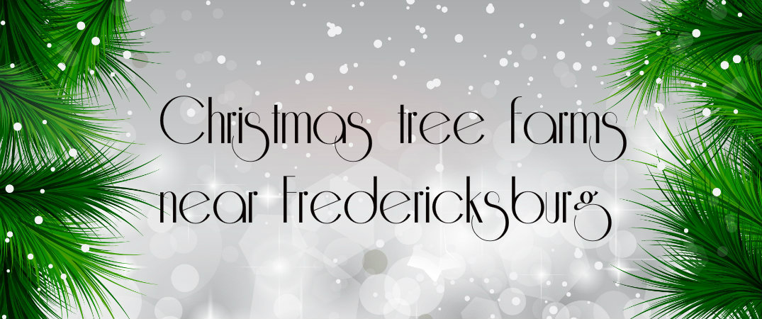 Fredericksburg Christmas tree farms