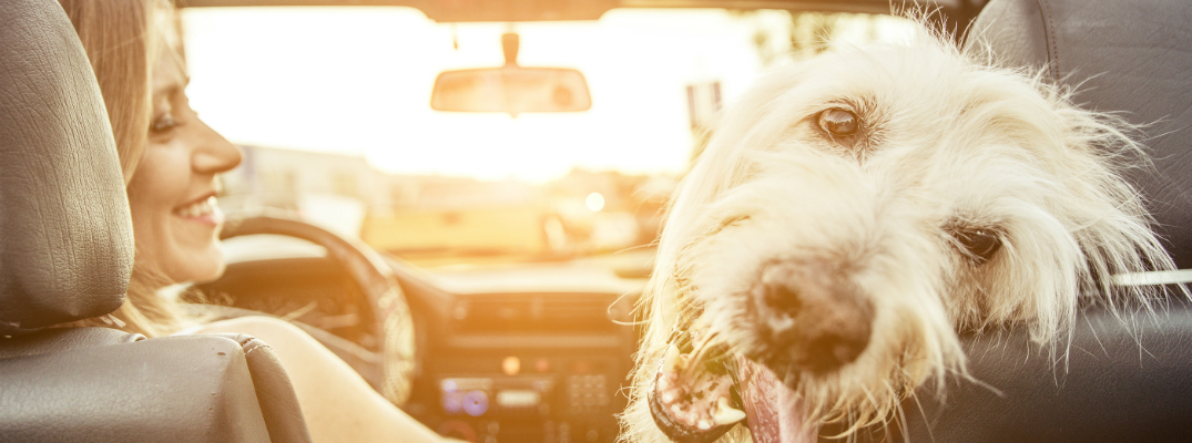 3 Tips and Tricks for Keeping Your Pet Safe in Hot Weather Woman and her dog