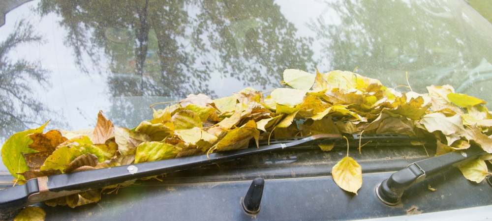 A close-up of windshield wipers covered in leaves