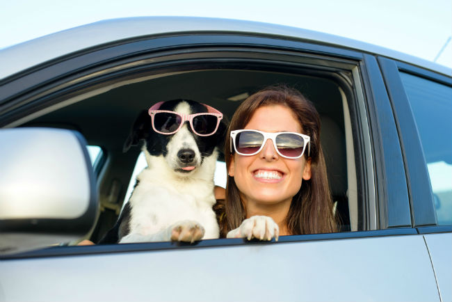 how to keep your dog safe in the car pet car safety tips Mazda of Lodi NJ