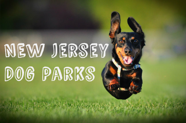 Dog Friendly Parks Hackensack NJ
