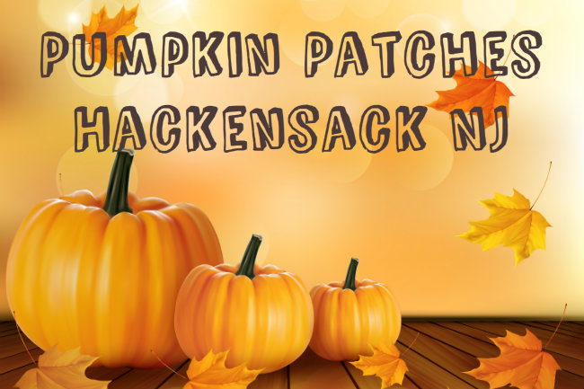 Pumpkin Patches Hackensack NJ