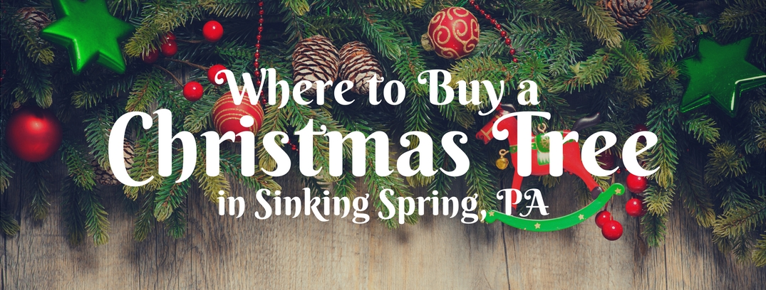 Where to Buy a Christmas Tree in sinking spring pa