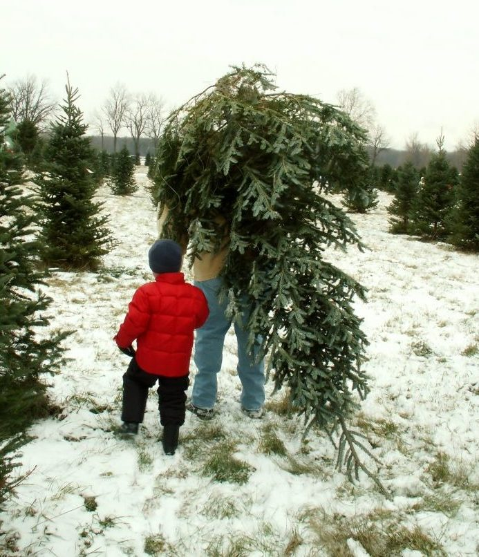 father and son bringing home the christmas tree
