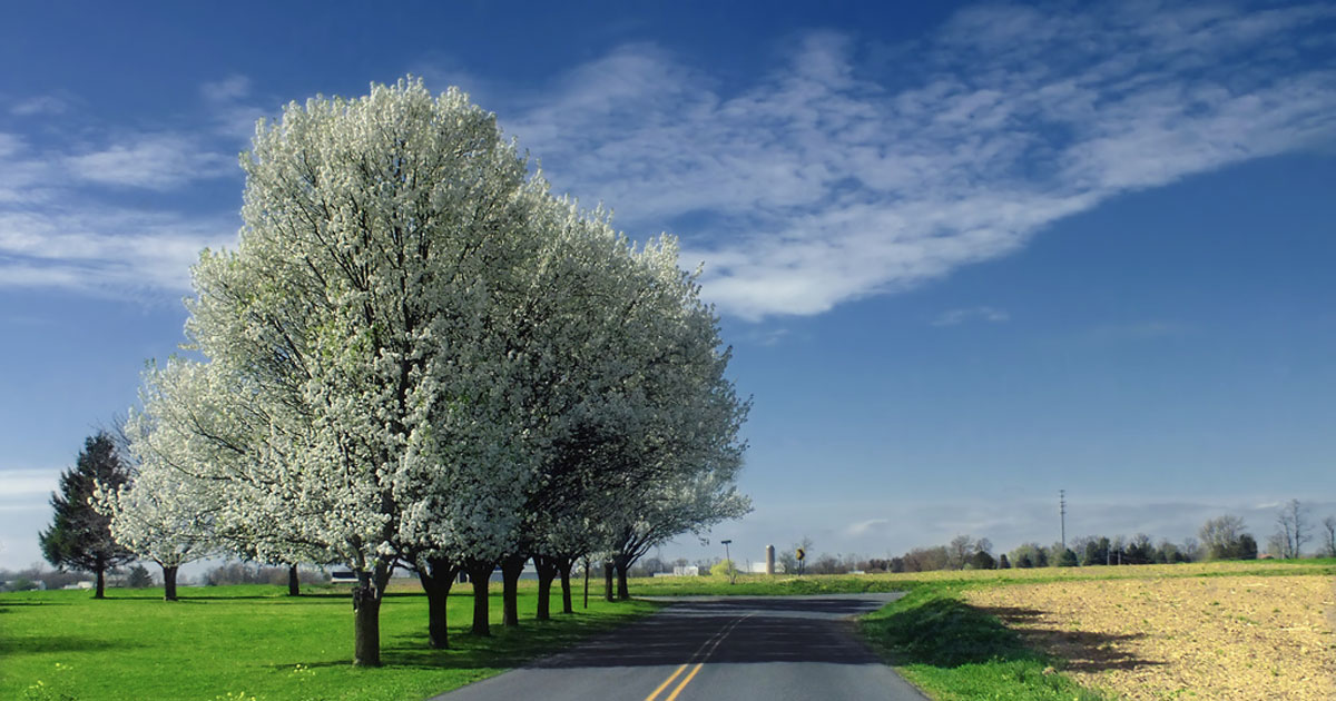 Here are 4 Spring Driving Tips for Pennsylvania Roads