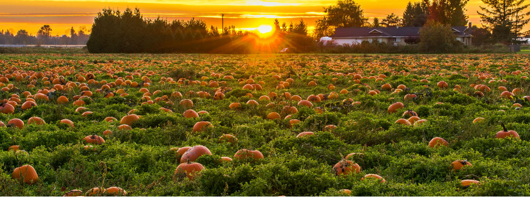 Pumpkin Picking Long Island Ny Best