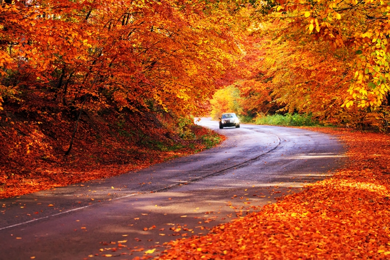 Show your car some love before fall with these maintenance services.