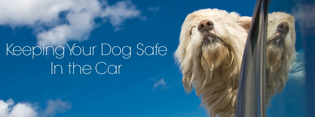 How to Keep Your Dog Safe in the Car