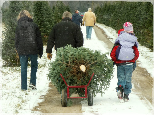 Christmas Tree Farms & Lots Wilmington DE