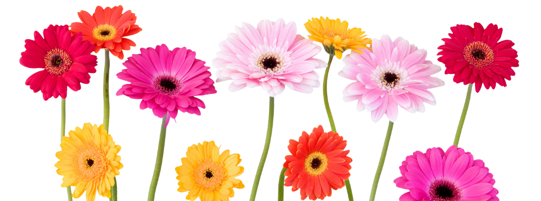 2017 Mother's Day Events Near White Plains, NY Flowers