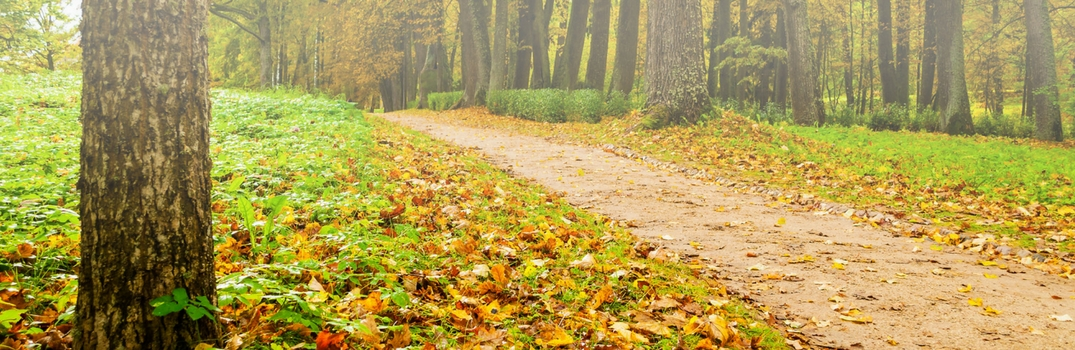 Best Places to See the Leaves Change in Wilsonville OR