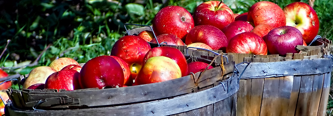 Top 3 Places to get Fall Produce in Jefferson County