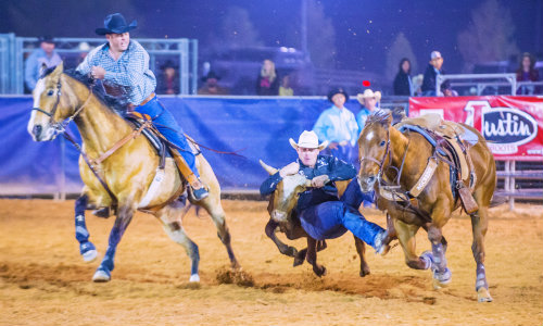 Wrangling Cattle - Summer 2017 Rodeos in South Carolina