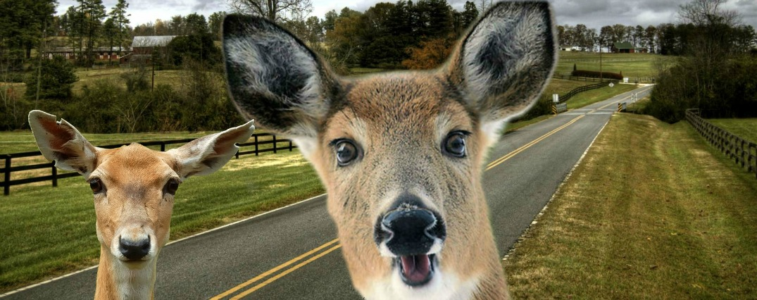 Sir Walter Raleigh Chevy The Unfortunate Bambi Sequel: How to Avoid Hitting a Deer