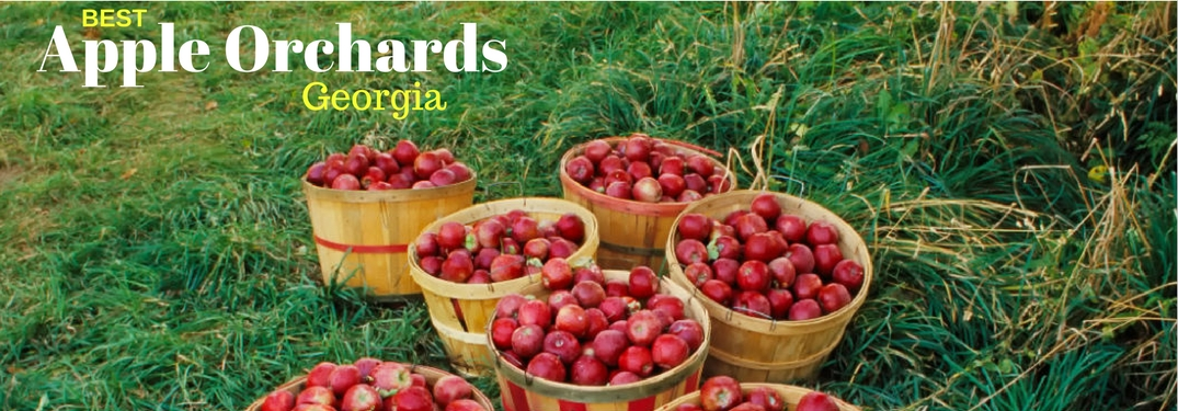 Where are the Best Apple Orchards in GA