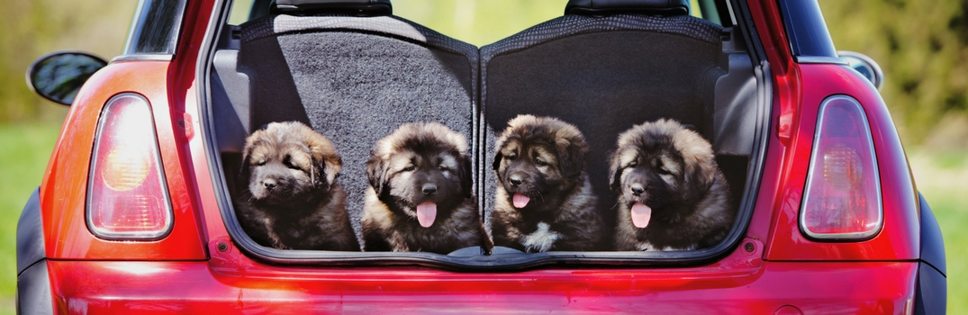 How to Protect Your Vehicle from Dog Hair