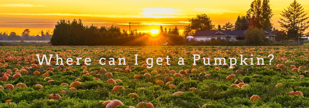 Where can I get a pumpkin with sunset in background