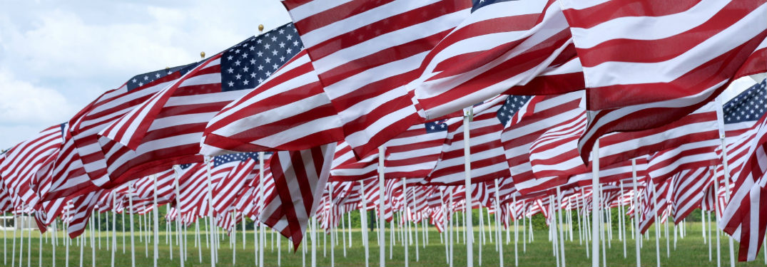 hundreds of small american flags planted in grass blowing in the wind